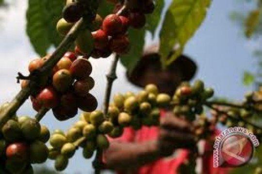 Krisis harga, Wapres RI suarakan aksi bersama negara produsen kopi