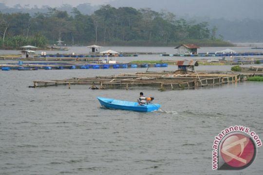 Ratusan ton ikan mati petani rugi miliaran