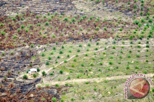 Perambahan Taman Nasional Tesso Nilo mengkhawatirkan