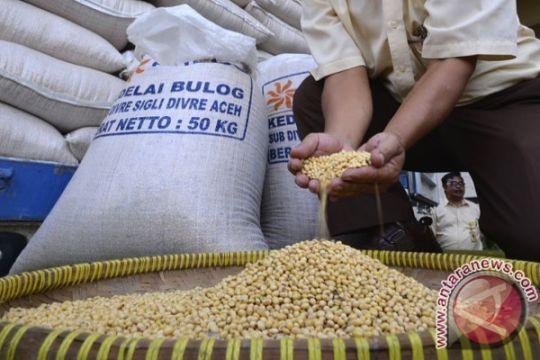 Papua Barat dapat 1,5 ton benih kedelai bersubsidi tahun ini