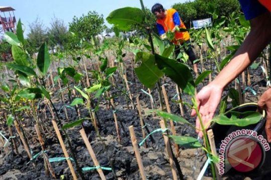 Rawat mangrove, muliakan hidup