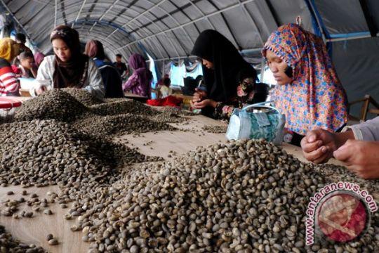 Ketiga terbesar di dunia, produksi kopi Indonesia di bawah Brasil