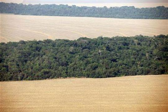 UNEP sebut Hutan Amazon benteng alami lawan perubahan iklim