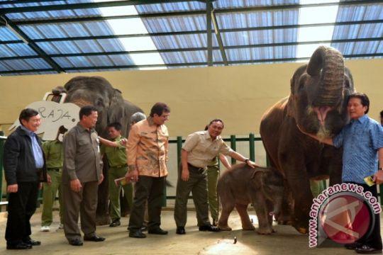 Menhut Beri Nama Raja Pada Anak Gajah Yang Lahir di Taman Safari Indonesia (TSI)