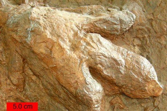Spesies dinosaurus baru ditemukan di Australia