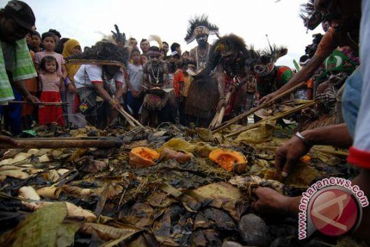 Penderita cacing pita babi banyak ditemukan di Papua