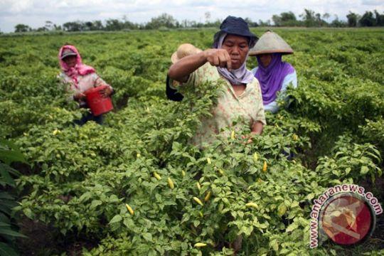 Kalsel siapkan 1.500 hektare lahan untuk transmigran