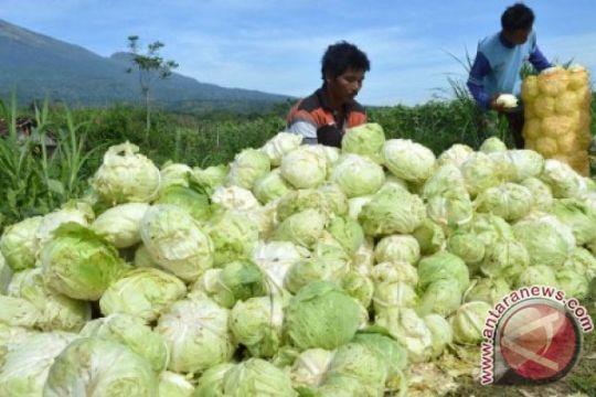 Kementan siapkan varietas sayuran antisipasi perubahan iklim