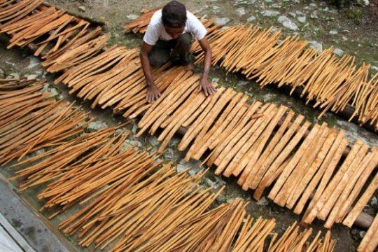 Balitbangtan siap tingkatkan kualitas produk kayu manis