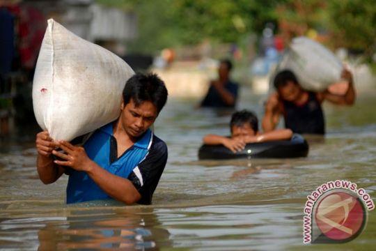 Akibat banjir, petani Kabupaten Gresik-Jatim lakukan panen dini