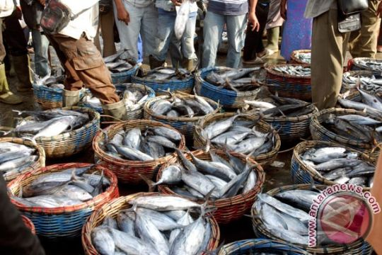 Sektor perikanan Indonesia terganjal minimnya dukungan logistik