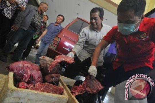 Kementan: penyelundupan daging celeng naik jelang Ramadhan