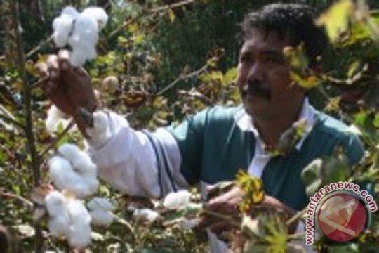 Bali produksi kapas untuk keperluan lokal