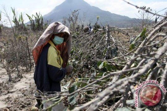 BNPB bentuk Ikatan Ahli Kebencanaan Indonesia