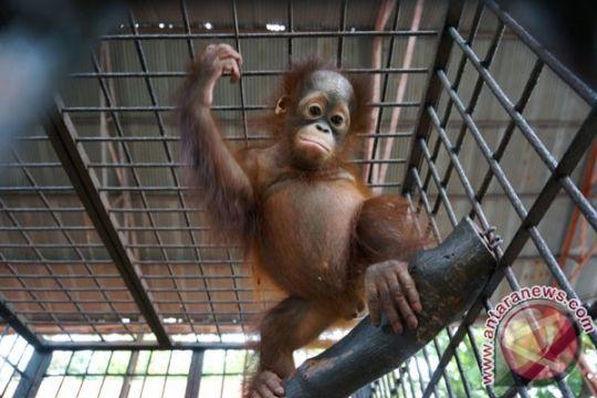 Kebun Binatang Surabaya jadi Lembaga Konservasi