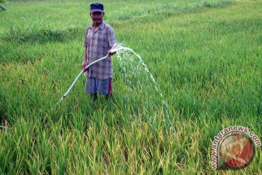 Realisasi pertanaman padi Langkat 7.000 hektare