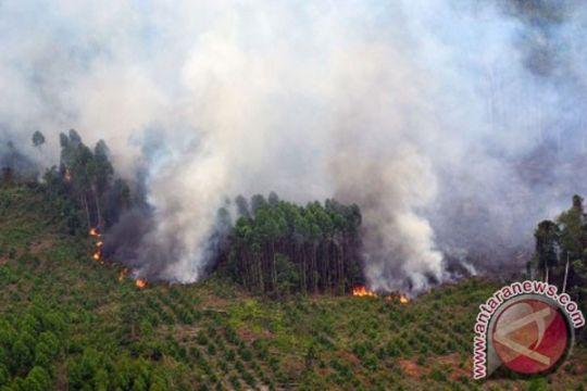Indonesia-Norwegia perkuat kemitraan penyelamatan hutan REDD+