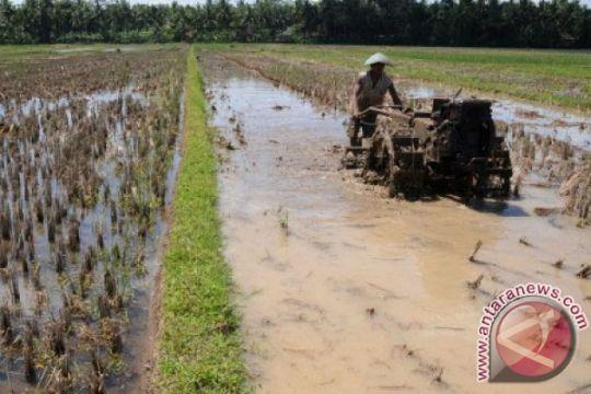 Pemerintahan Jokowi-JK harus ubah sistem pertanian komoditas pangan