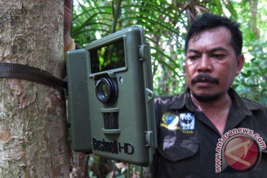 4 anak badak jawa lahir di Taman Nasional Ujung Kulon
