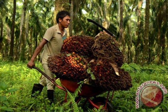 RSPO nilai standar sawit Indonesia-Malaysia sulit dijalankan