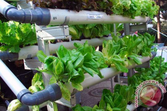 Petani Palestina belajar pertanian hidroponik di Bandung