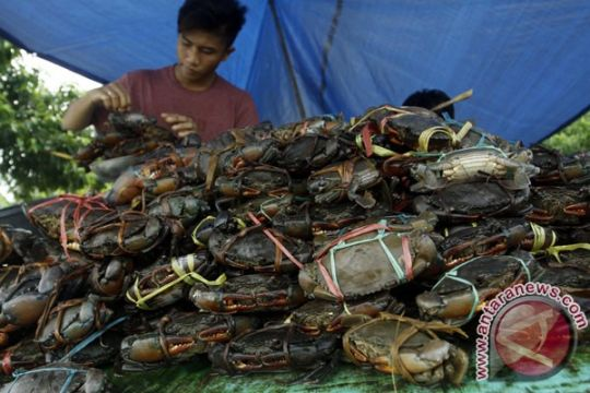 Ahli biologi Filipina temukan spesies baru kepiting air tawar