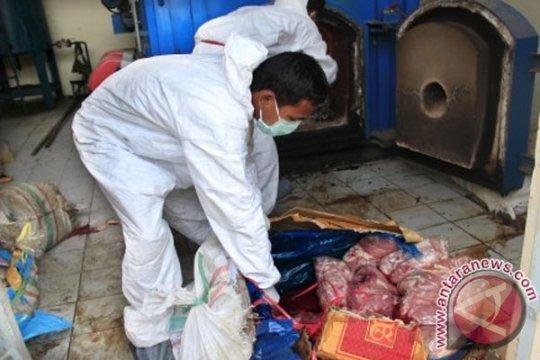 Kementan musnahkan 1.463 kilogram daging celeng