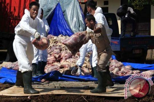 Kementan siap antisipasi peredaran daging celeng