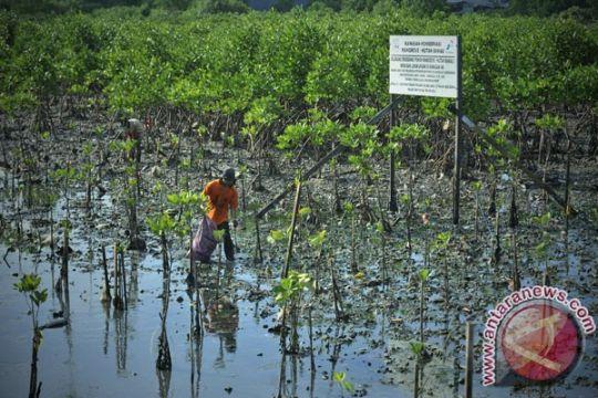 Hampir 40 persen hutan mangrove Indonesia rusak