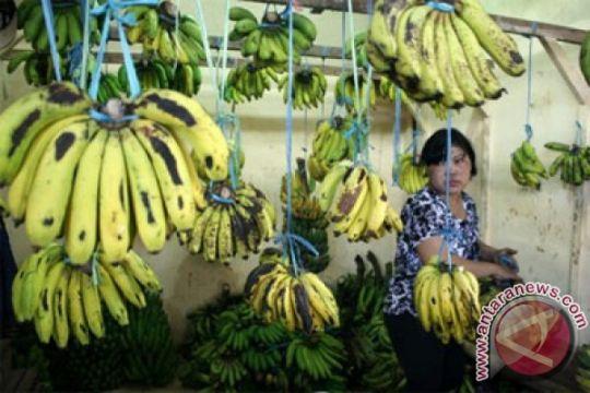 Kementan: Pisang Mas Lampung ekspor perdana ke Tiongkok