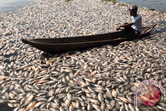 Jutaan ikan mati cemari Sungai Riam Kanan