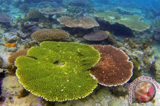 Sebagian karang sudah beradaptasi dengan pemanasan global