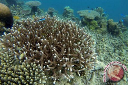 Pariwisata laut Indonesia jadi nomor satu dunia