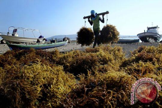 Ancaman AS delisting rumput laut Indonesia tidak berpengaruh pada ekspor