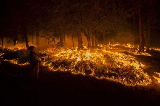 1.000 hektare lahan terbakar di California