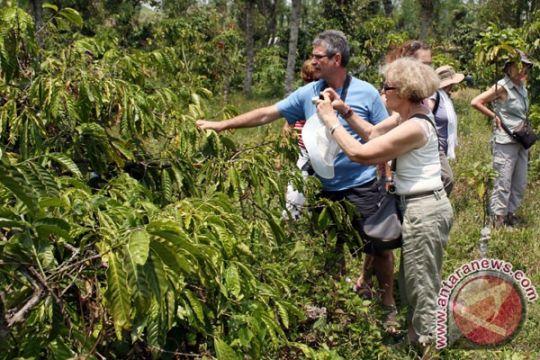 Freeport kembangkan kopi di dataran tinggi Mimika