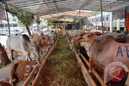 Polres Ngawi belum tetapkan tersangka penggelonggongan sapi
