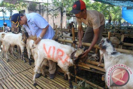 Dinas peternakan Kediri bentuk tim periksa ternak kurban