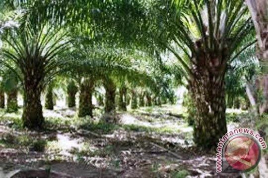 Perusahaan sawit kembalikan 52 ribu ha lahan ke Pemda Papua Barat