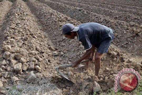 Kemarau petani terpaksa tunda tanam