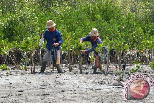 Batam dirikan rumah mangrove untuk edukasi