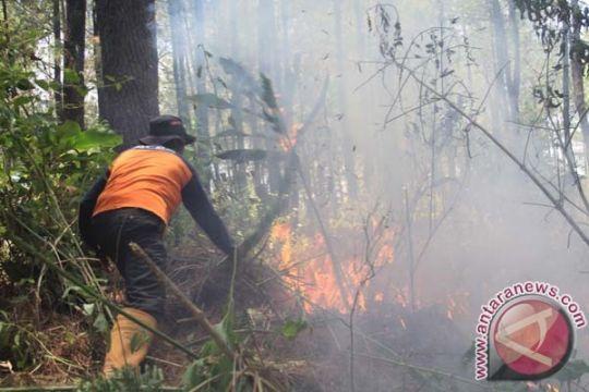 Luas kebakaran hutan Gunung Semeru 200 Ha