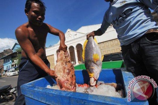 Perbankan mulai lirik pembiayaan ekspor ikan kerapu di Sumatera Barat