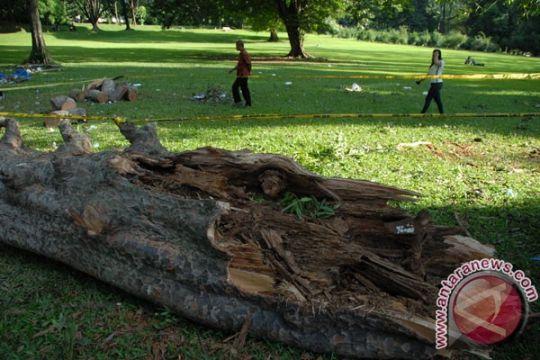 Tiga siswa tewas, belasan terluka tertimpa pohon di Kamerun