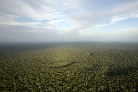 Kemampuan Amazon menyerap karbon turun drastis
