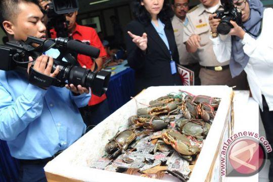 KKP gagalkan pengiriman kura-kura dan lobster bertelur