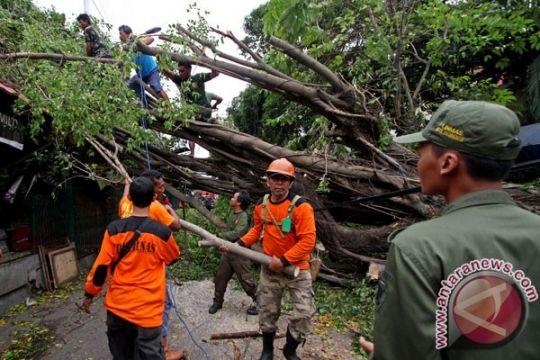 Hujan sebabkan pohon tumbang 62 titik di Yogyakarta