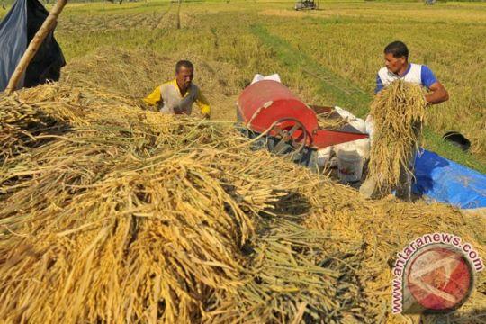 Luas area panen padi Maret sampai 2,4 juta hektare