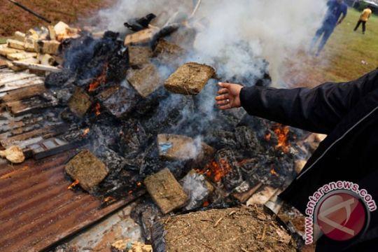 Polres Pasaman Barat musnahkan barang bukti 10 kilogram ganja