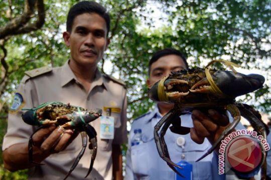 Balai Karantina Makassar lepas ratusan kepiting bertelur